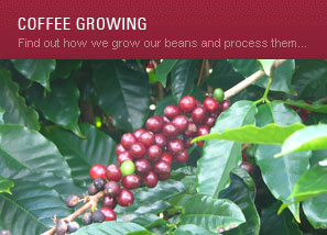 Coffee growing